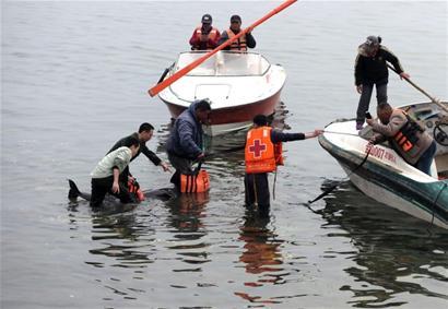 江豚搁浅栈桥东岸 警民动用快艇将其送回深海