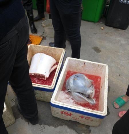 据网友爆料,在广东省珠海市金湾区南水镇附近发现有人在猎杀海豚