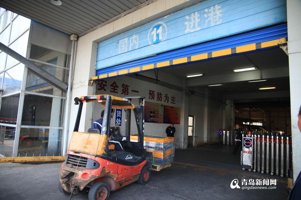 3岁华南虎打飞机离青 连夜赶赴重庆成亲(图)