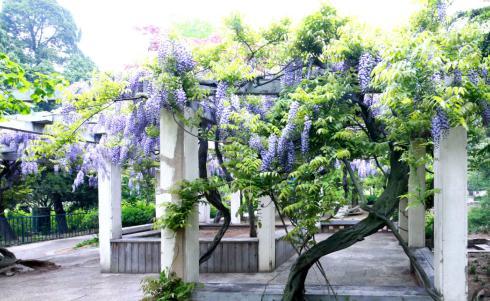城阳区世纪公园,即墨市府前西街,平度市现河公园植物园,胶州市三里河