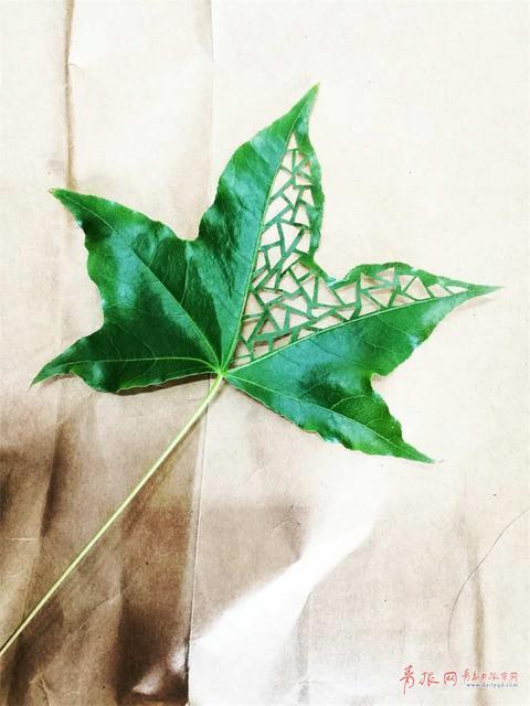 """""""开始是在树叶上画画,在石头上画画,后来就在树叶上绣花,最后是在树叶"""