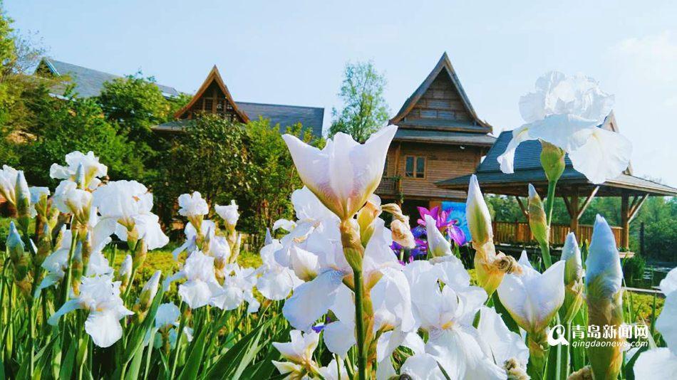 世博园被鲜花占领 万株百合齐放香满园
