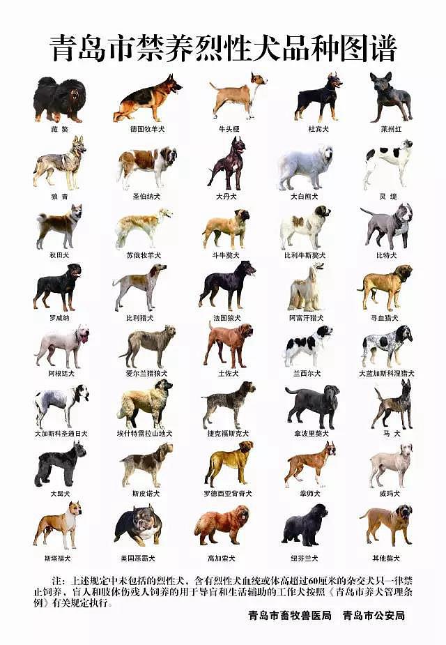 青岛最新养犬条例解读 这40种犬不能养