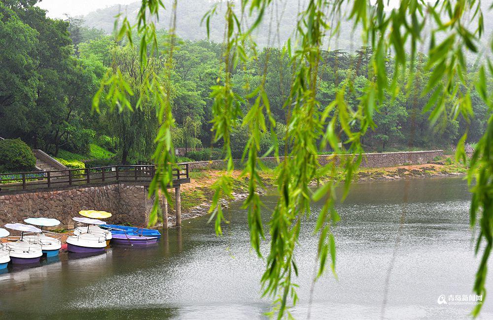 高清:雨中青岛秒回20℃ 小西湖荷花悄悄开了