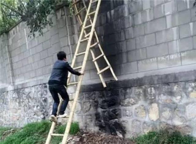 2女1男逃票翻墙进动物园 落地时周围站7只虎