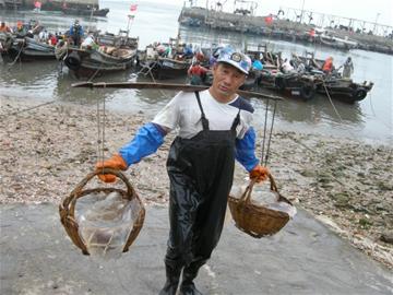 黄山社区海蜇进入捕捞季 一天上岸6万斤(图)