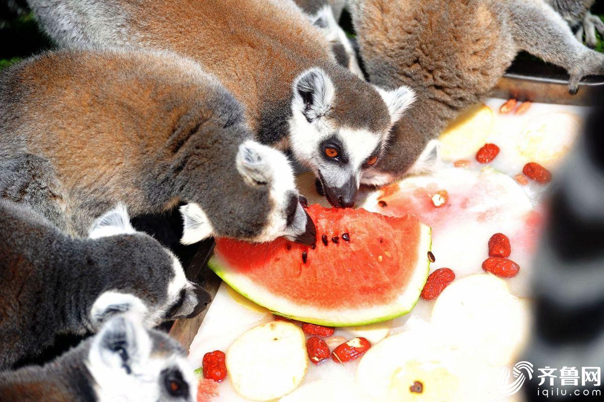 高温下的野生动物 吃西瓜泡水池吹空调(组图)