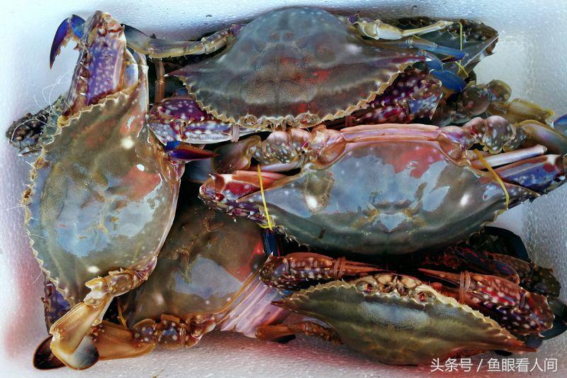 """青岛市的大小海鲜市场被外来海蟹""""占领""""."""