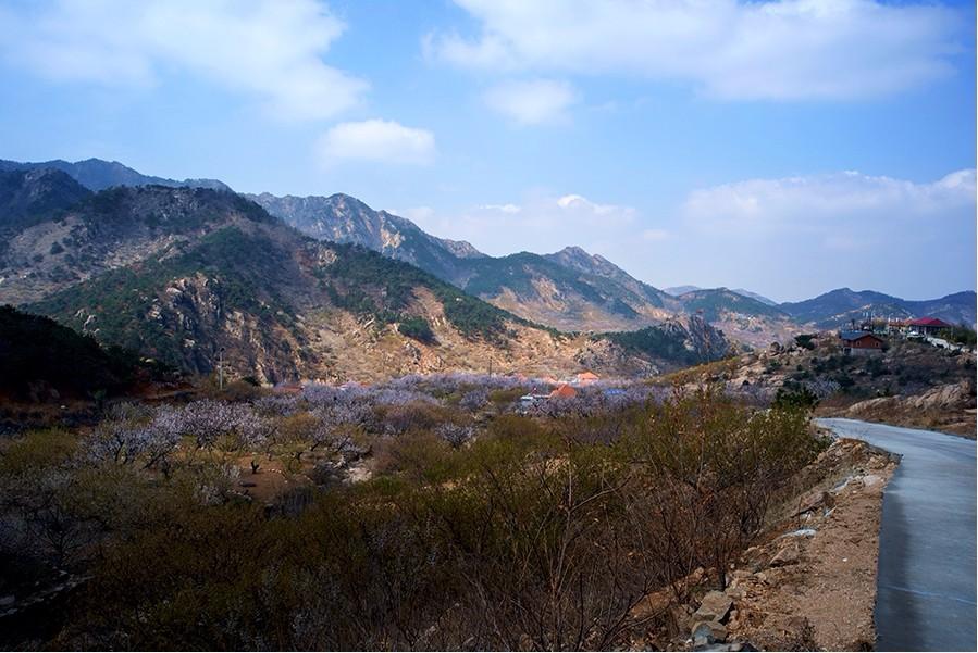 国家3a景区玫瑰小镇风景区就坐落于西姜戈庄村